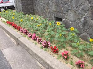 お花たちもお客様をおもてなし(^^)
