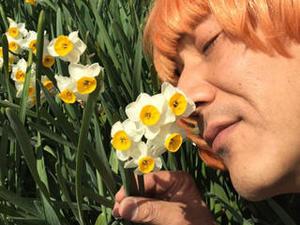 水仙の開花状況速報 - 三分咲き in 灘黒岩水仙郷